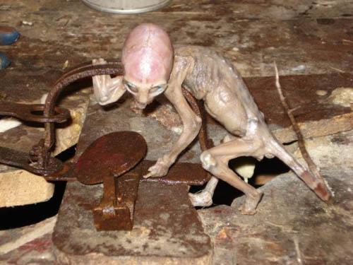 Mexic - extraterestru capturat in 2007