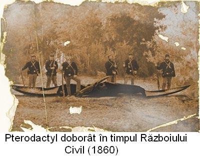 Pterodactil in timpul Razboiului Civil